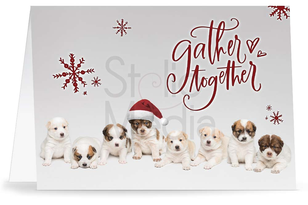 Holiday greeting card with eight puppies on light gray background