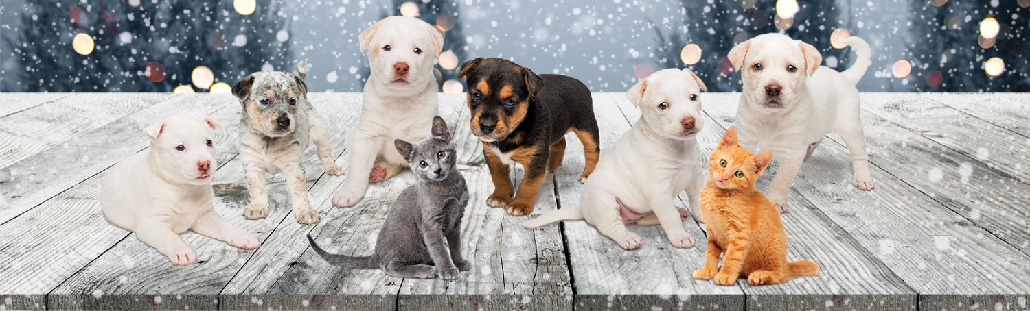 Six puppies and two kittens featured on LPCHS holiday greeting cards
